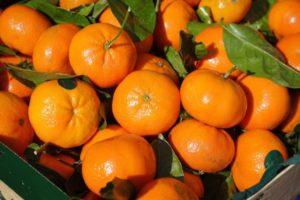 Clémentines MARQUILLANES, spécialiste producteur et import/export fruits, agrumes et légumes frais, Saint-Charles International